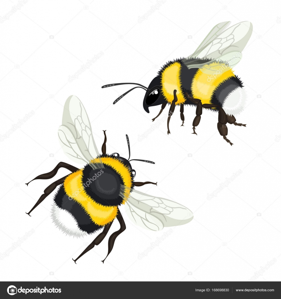 Two bumble bees with wings flying vector illustration isolated two bumble bees with wings flying vector illustration isolated stock vector biocorpaavc