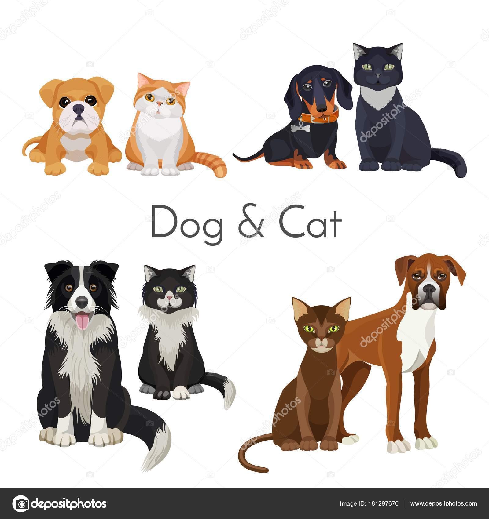 8846e9cf47ac1 Perro y gato cartel promocional con el animal adulto y bebés. Adorables  cachorros y gatitos de razas puras aislados de dibujos animados vector  plano ...