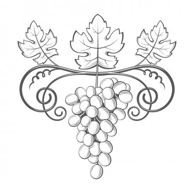 grapes bunches image