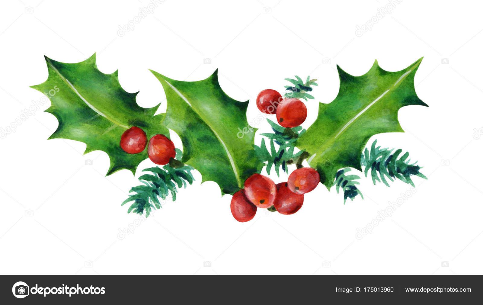 Feuille De Houx branche noël feuilles houx baies rouges aquarelle illustration isolé