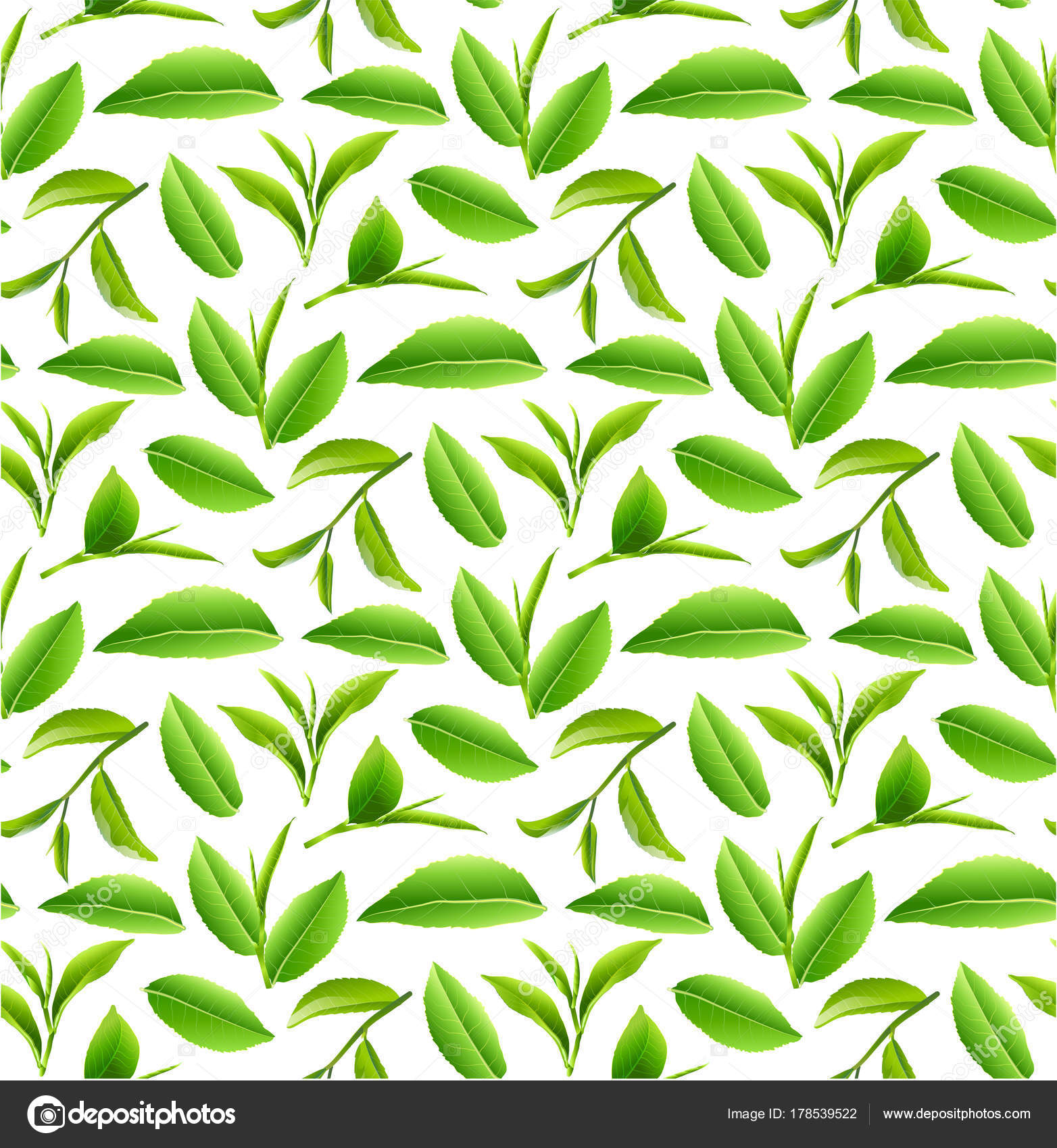 Green Tea Leaves Vector Nature Background Stock Photo C Auart 178539522