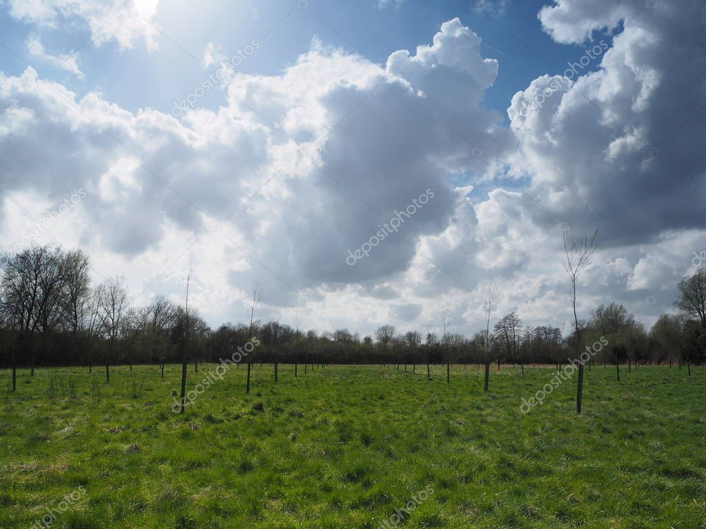Billowing white cumulus clouds above a green meadow