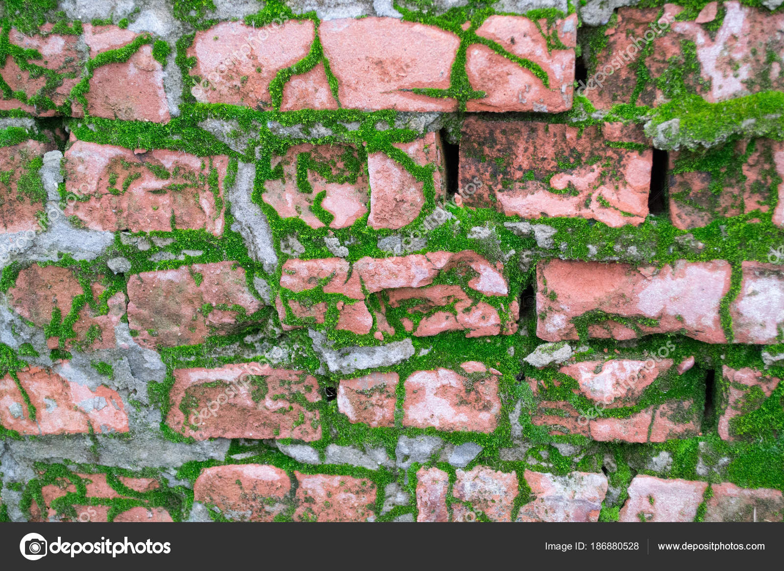 Texture Fond Une Vieille Brique Rouge Recouverte Mousse Verte — Photographie Insolite © #186880528
