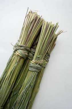A bunch of dry green lemongrass on a white background