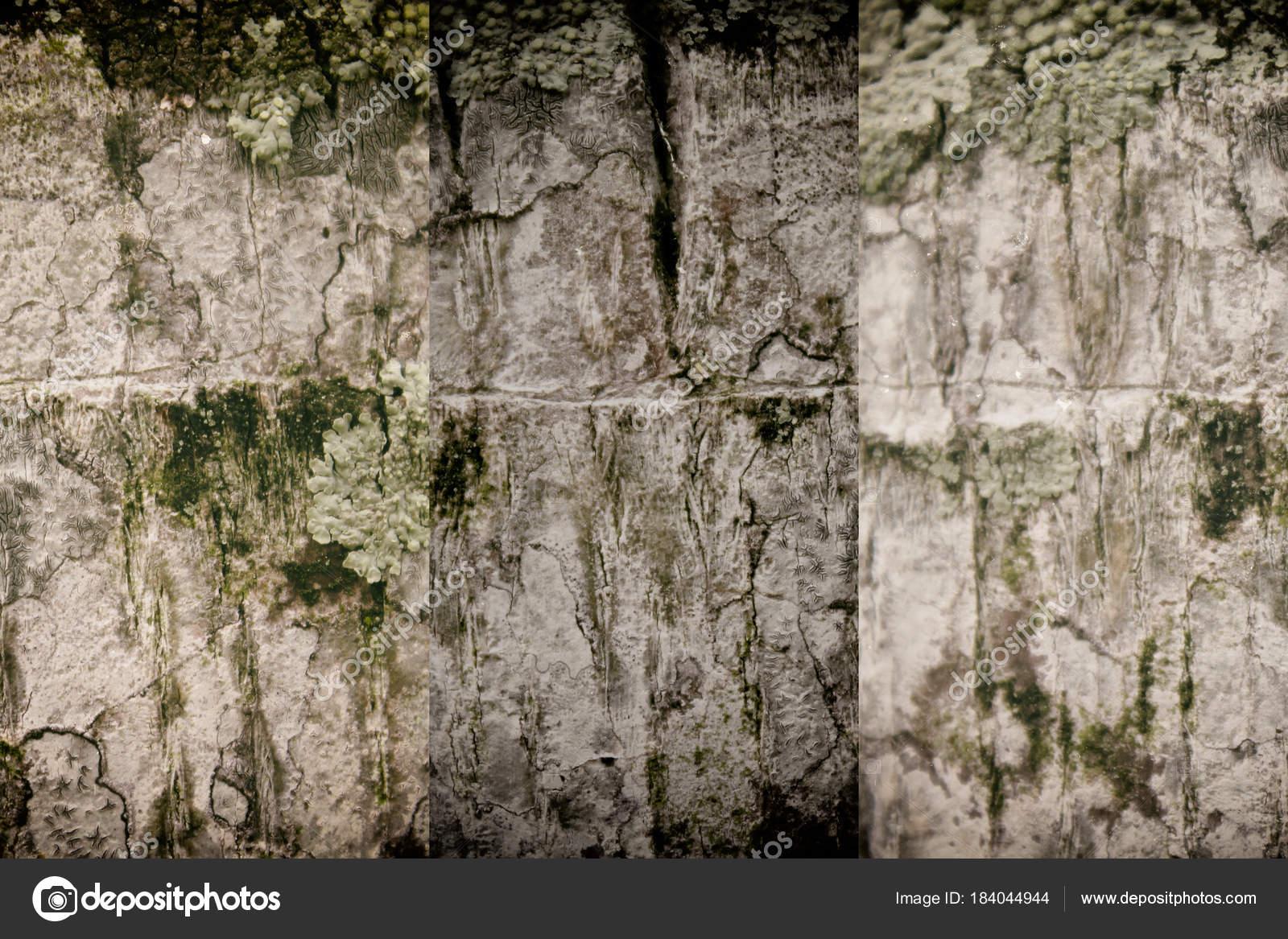 Struttura della corteccia di albero in legno sfondo per sito web e ...