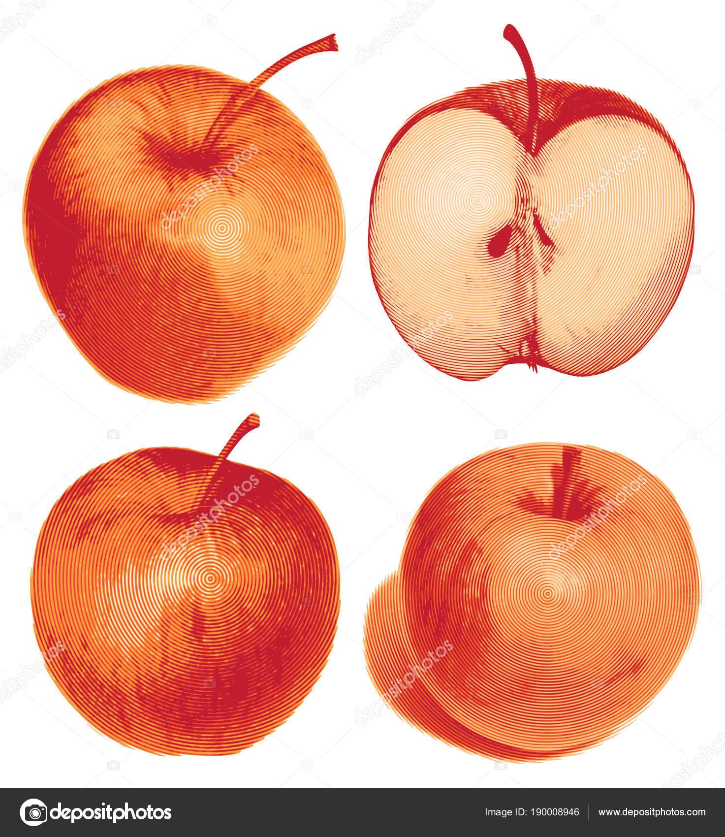 conjunto de aislados color manzana roja la mitad y todo — Vector de ...