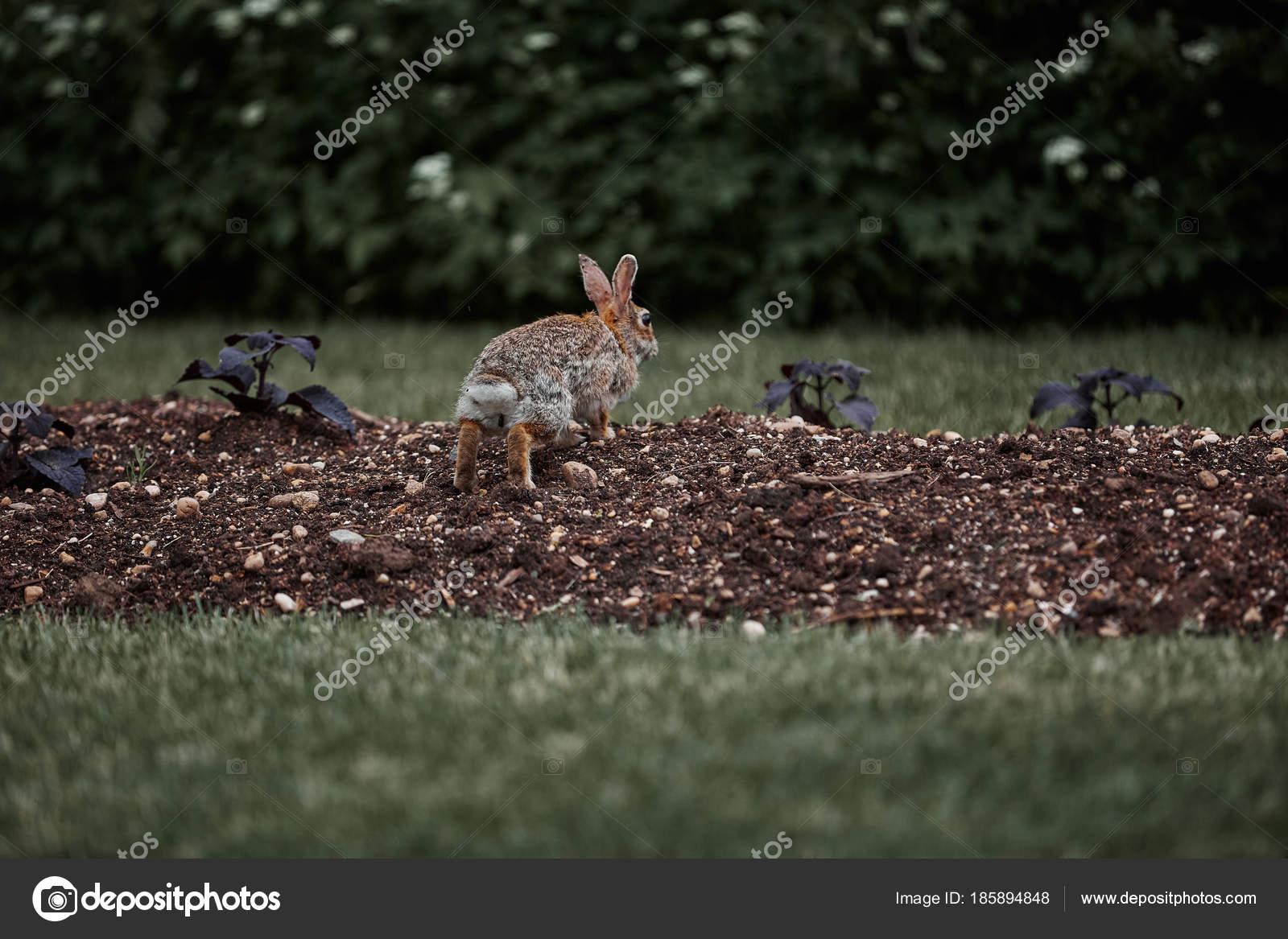c89b3ee4e Roztomilý chlupatý králík bunny velikonoční venkovní divoká– stock obrázky