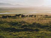 Fotografie koně
