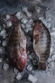 Draufsicht von rohem Seefisch auf Eiswürfel auf grau