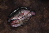 top view of raw fresh fish on vintage plate on dark table top