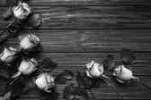 Fotografie krásné růže na pozadí Dřevěná prkna, černé a bílé