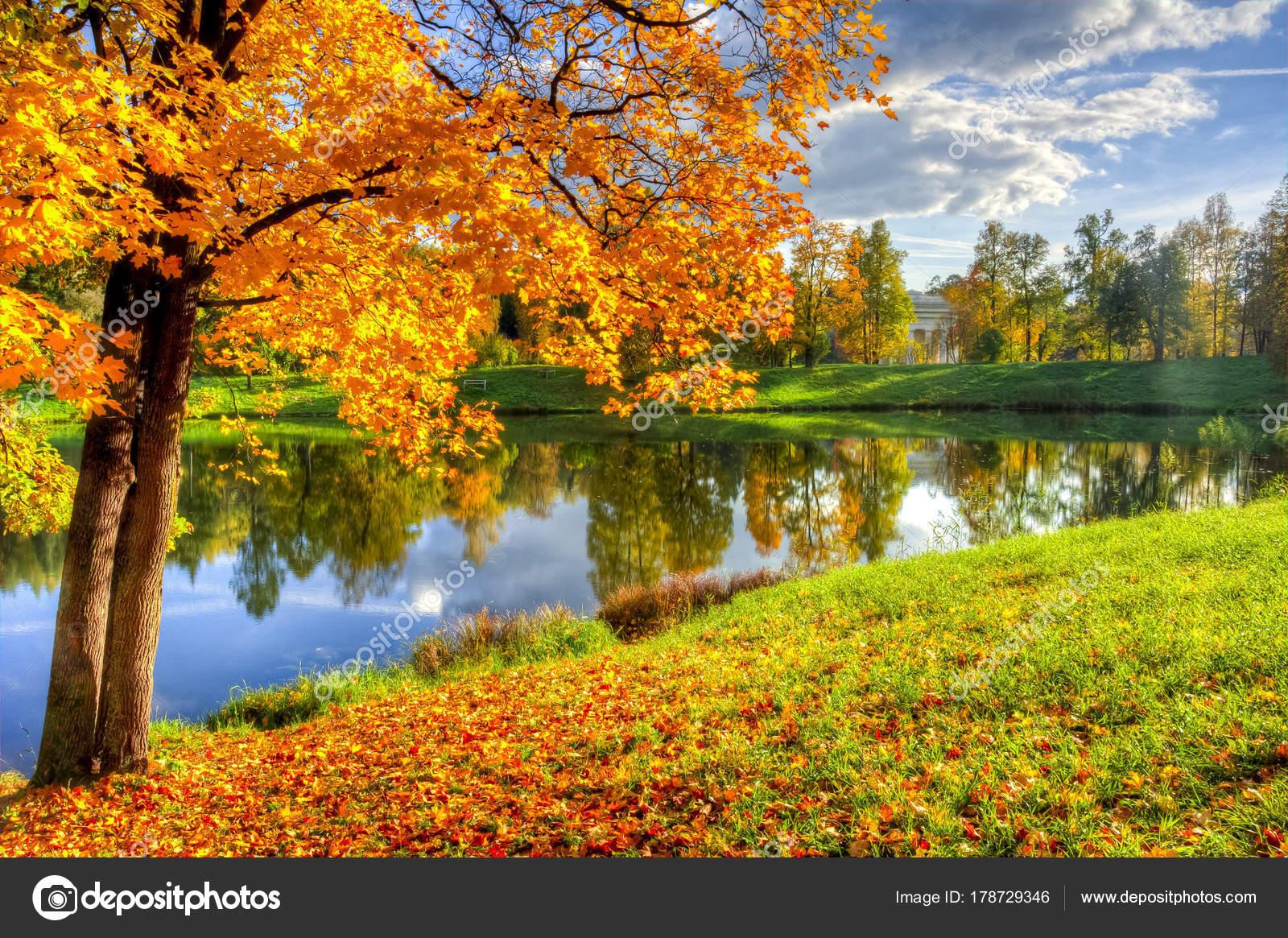 Золотая Осень Золотая Осень Павловский Парк Павловск Санкт ...