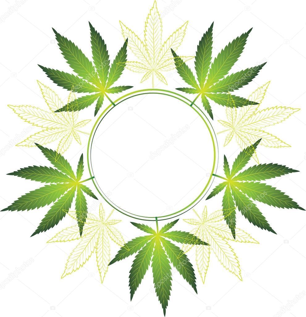 cannabis leaves in a circle