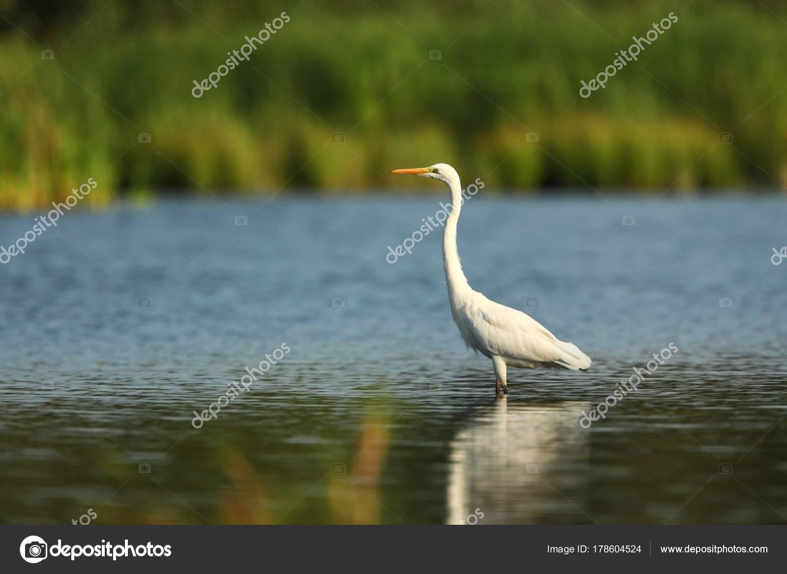 Ασίας άνθρωπος μεγάλο πουλί