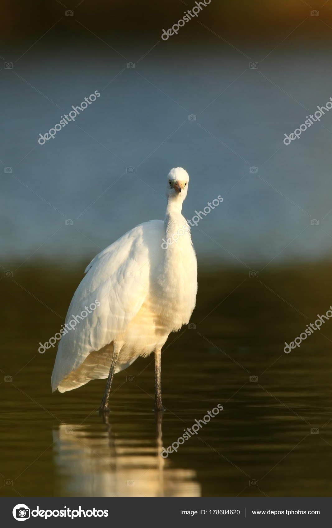 gay πορνό μεγάλο λευκό πουλί