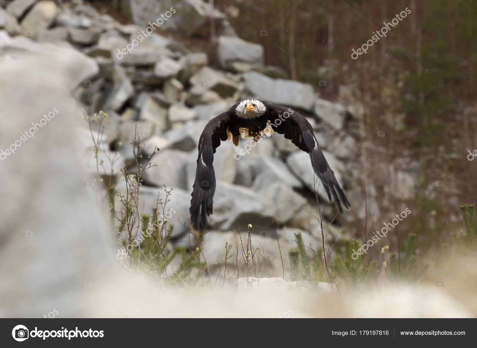 Τι αποτελεί ένα μεγάλο πουλί Πρωκτικός ανιχνευτής σεξ