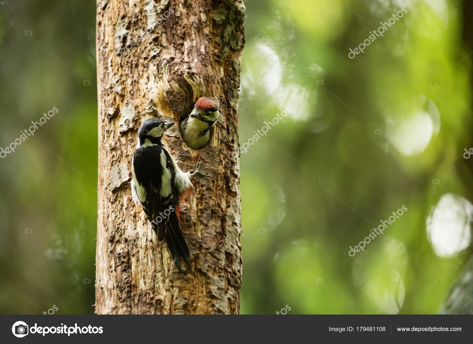 Μεγάλες εικόνες πουλί