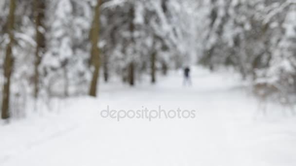 Krajina zimním lese
