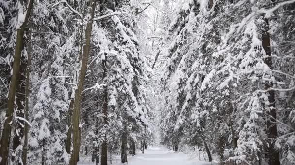 Landschaft des Winterwaldes.