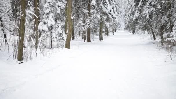 Krajina zimní Les.