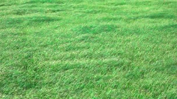 Lassú mozgás, fű, szeles napon