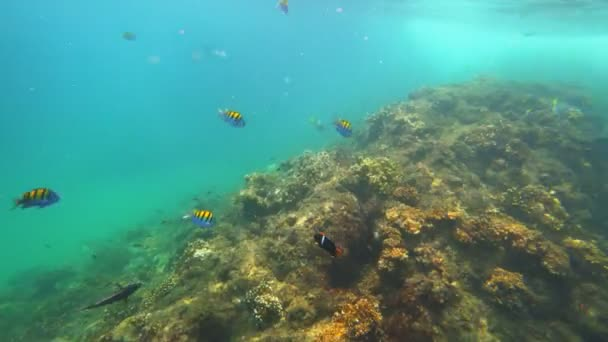 Diving in pacific ocean with colorful fish