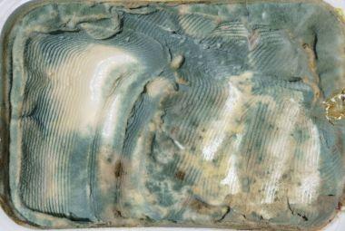Closeup on rotten fresh cheese tub
