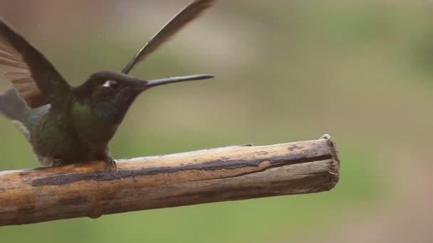 Kolibřík začne létání nad pobočkou v super zpomaleně