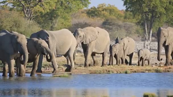 Elefanten in Etoscha