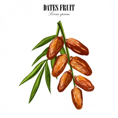 Dates with palm leaves on white background. Vector illustration.