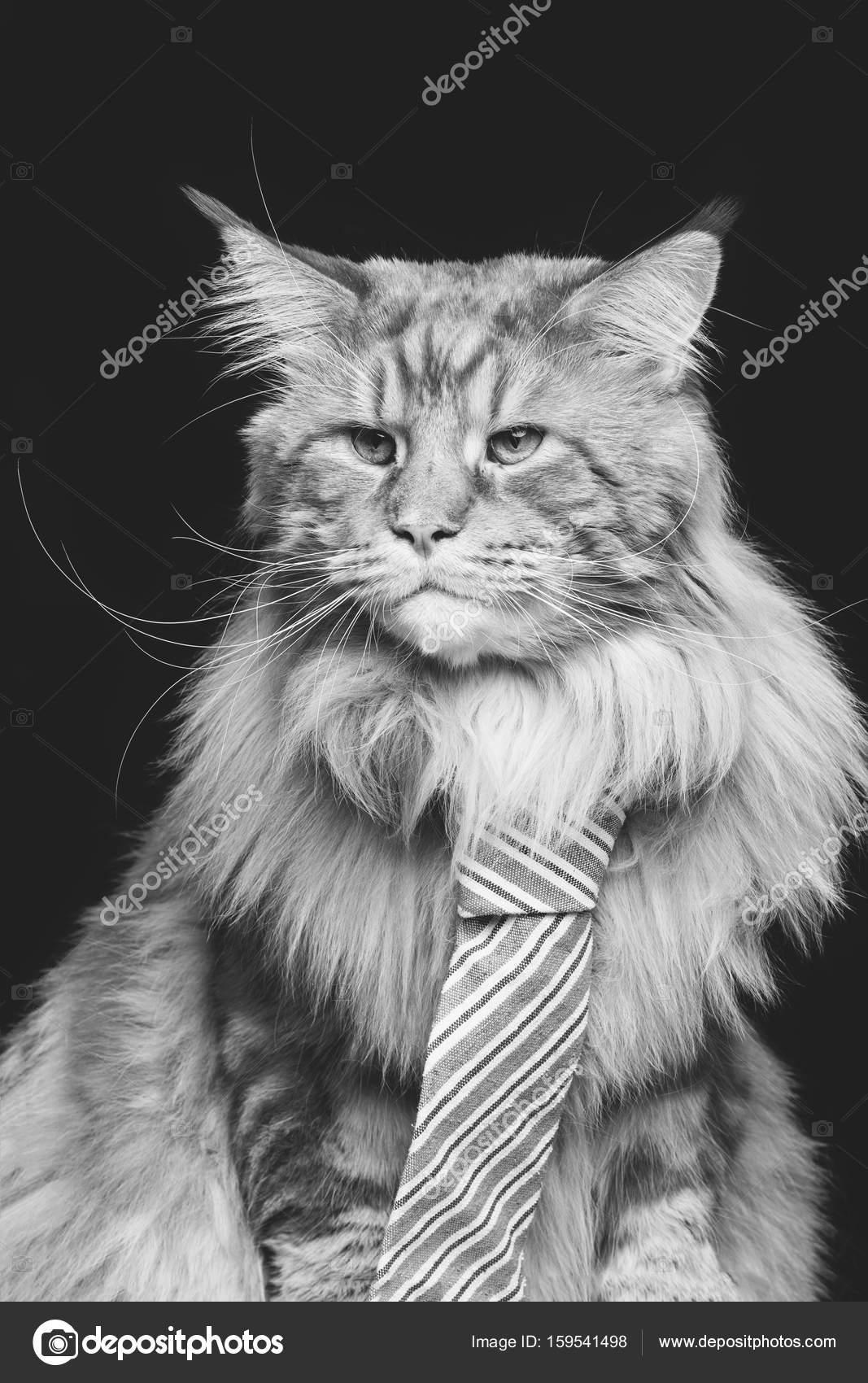 Velké kočičí tisky
