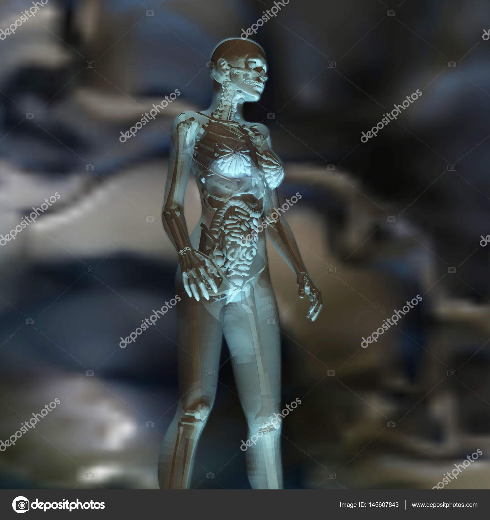 Digitale 3d Rendering der weiblichen Anatomie — Stockfoto © 3quarks ...