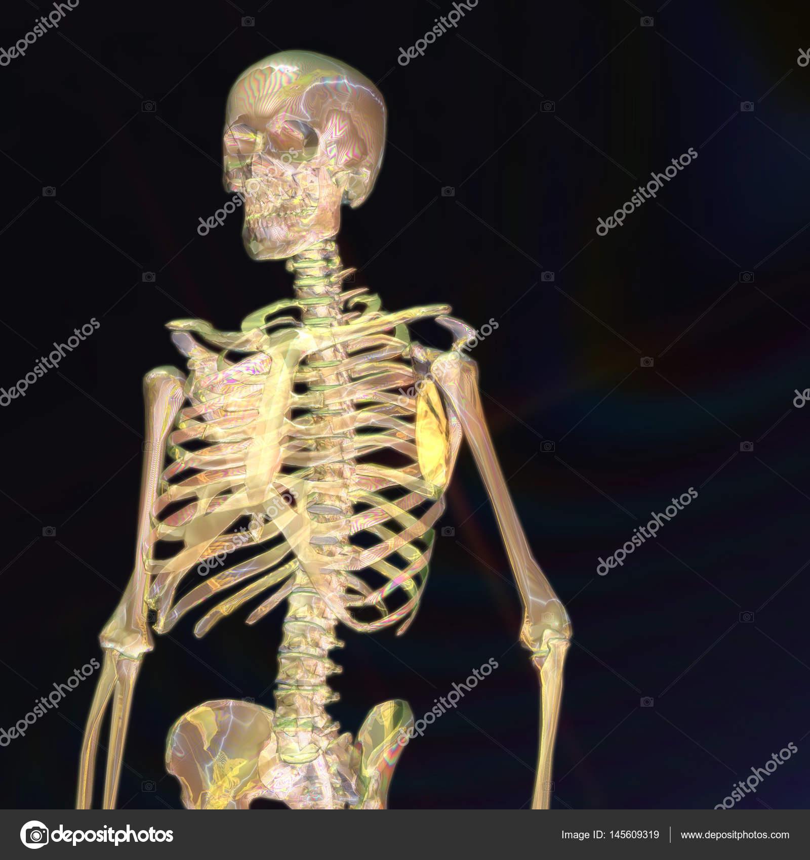 Digitale 3d Rendering eines menschlichen Skeletts — Stockfoto ...