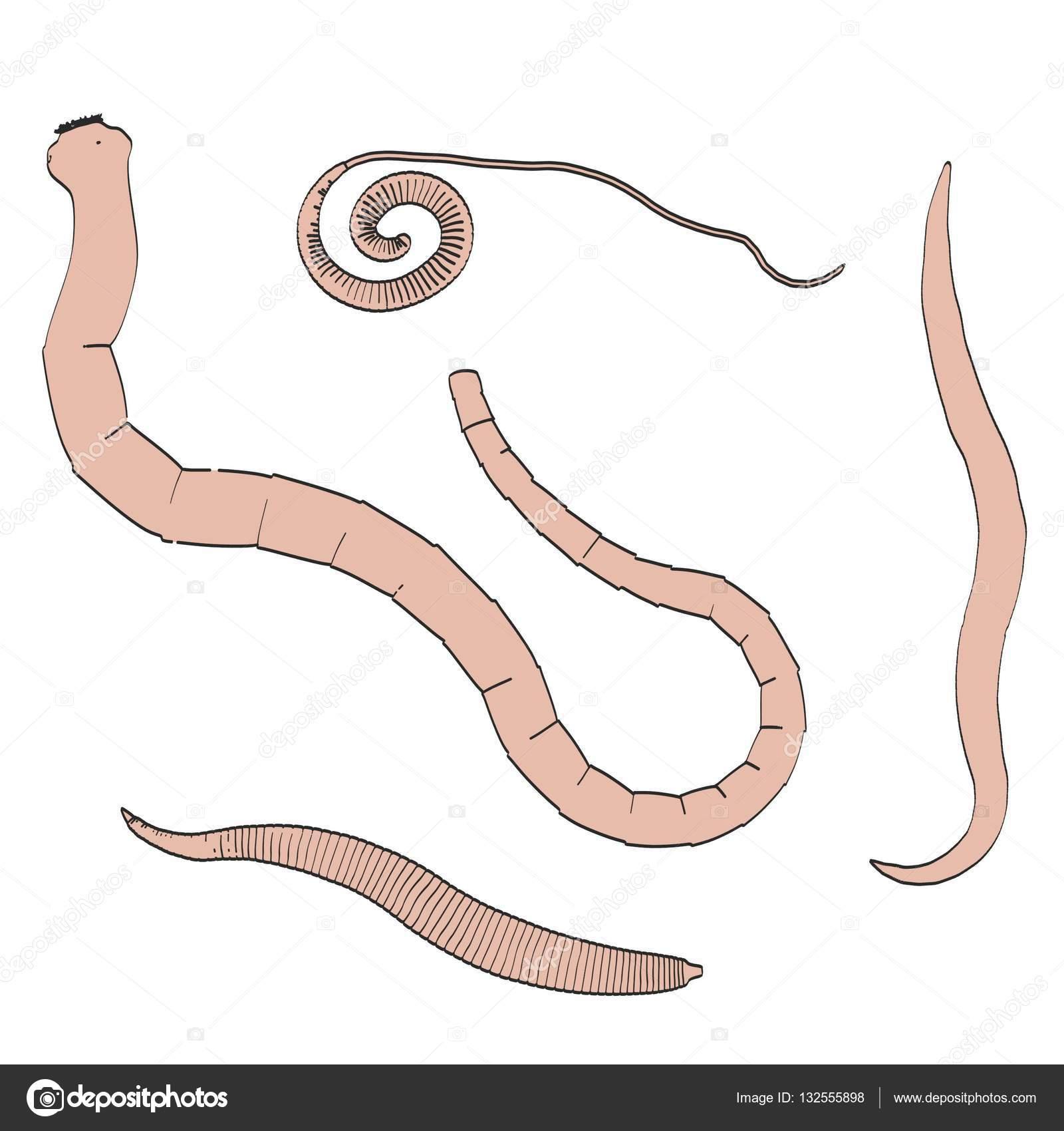 2D Cartoon Illustration des Verdauungssystems Parasiten — Stockfoto ...