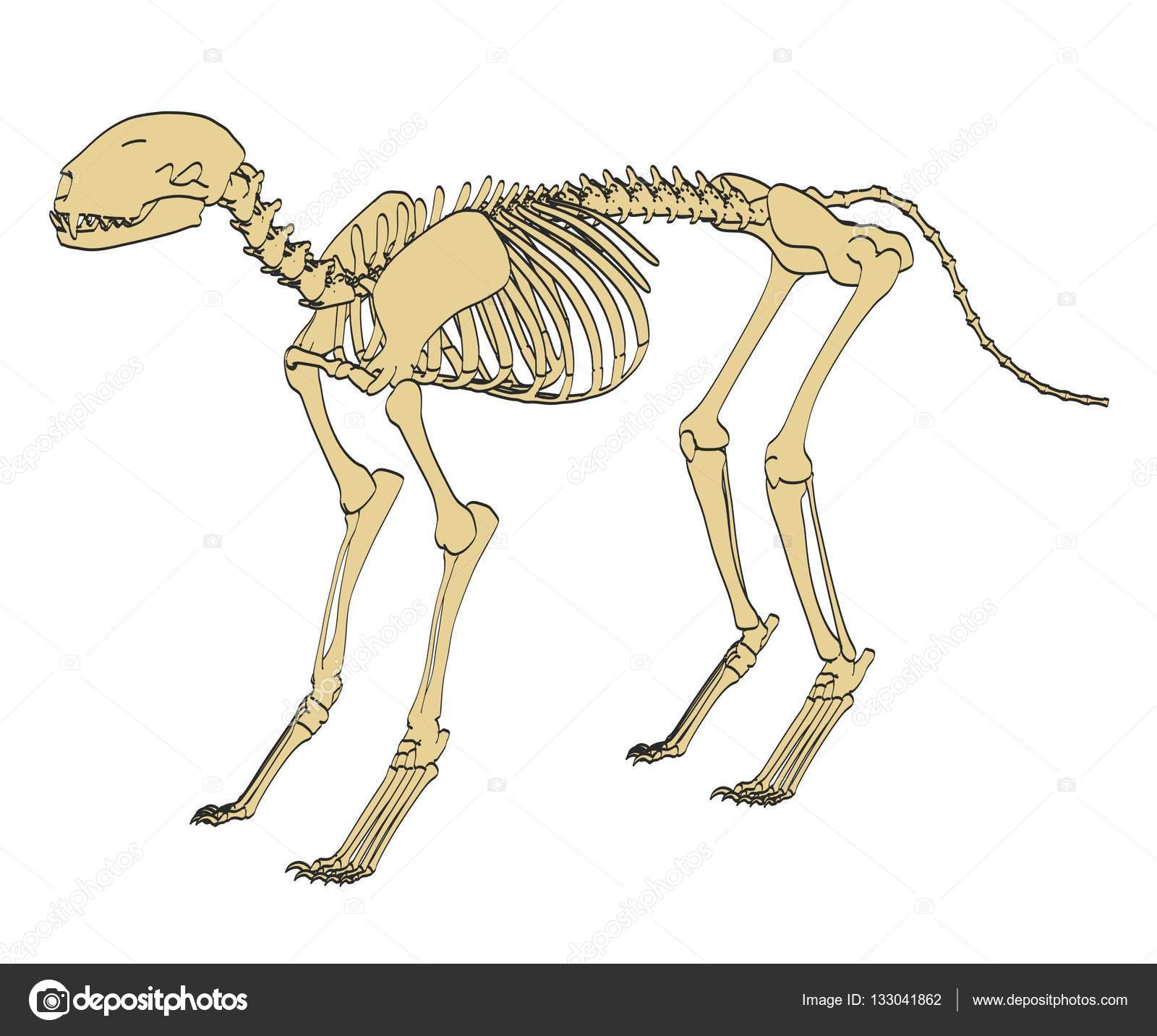 ilustração de desenho animado 2d do esqueleto felino fotografias