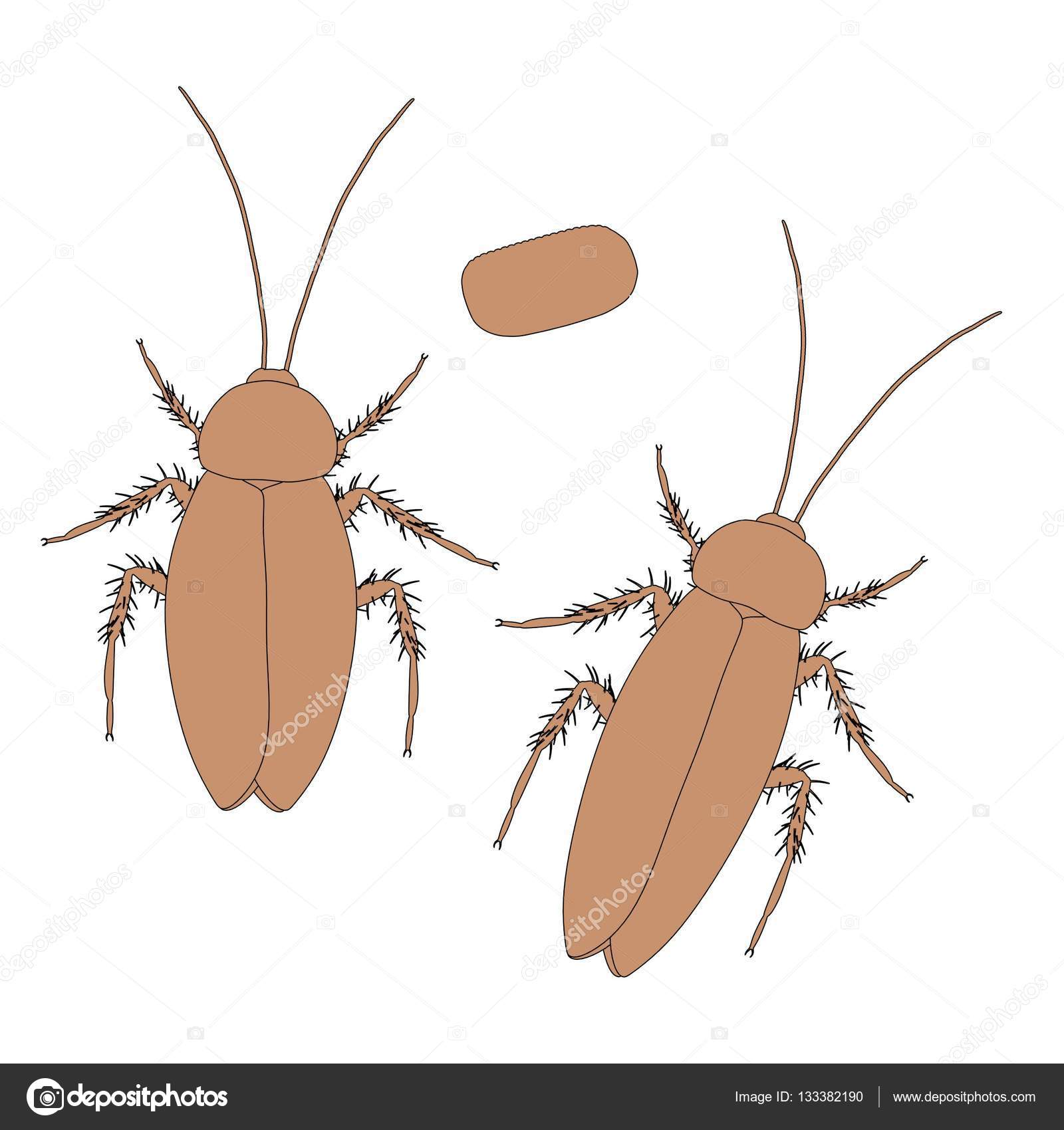 2d cartoon illustration of cockroach — Stock Photo © 3drenderings ...