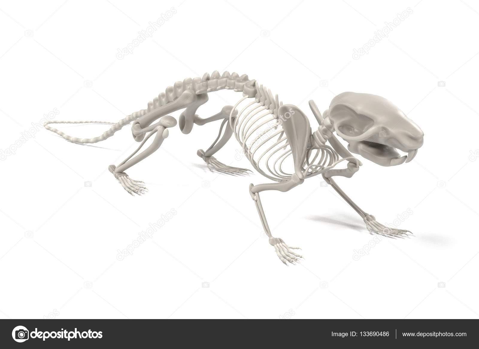 realistische 3d Render Ratte Skelett — Stockfoto © 3drenderings ...