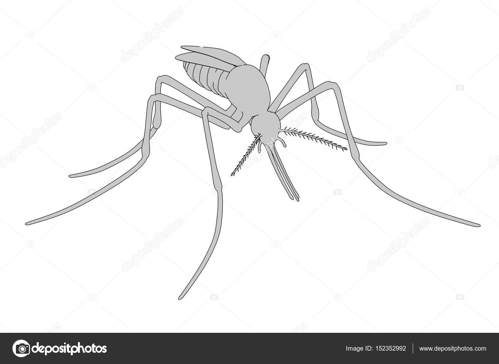 Illustrazione zanzara illustrazione di cartone animato d