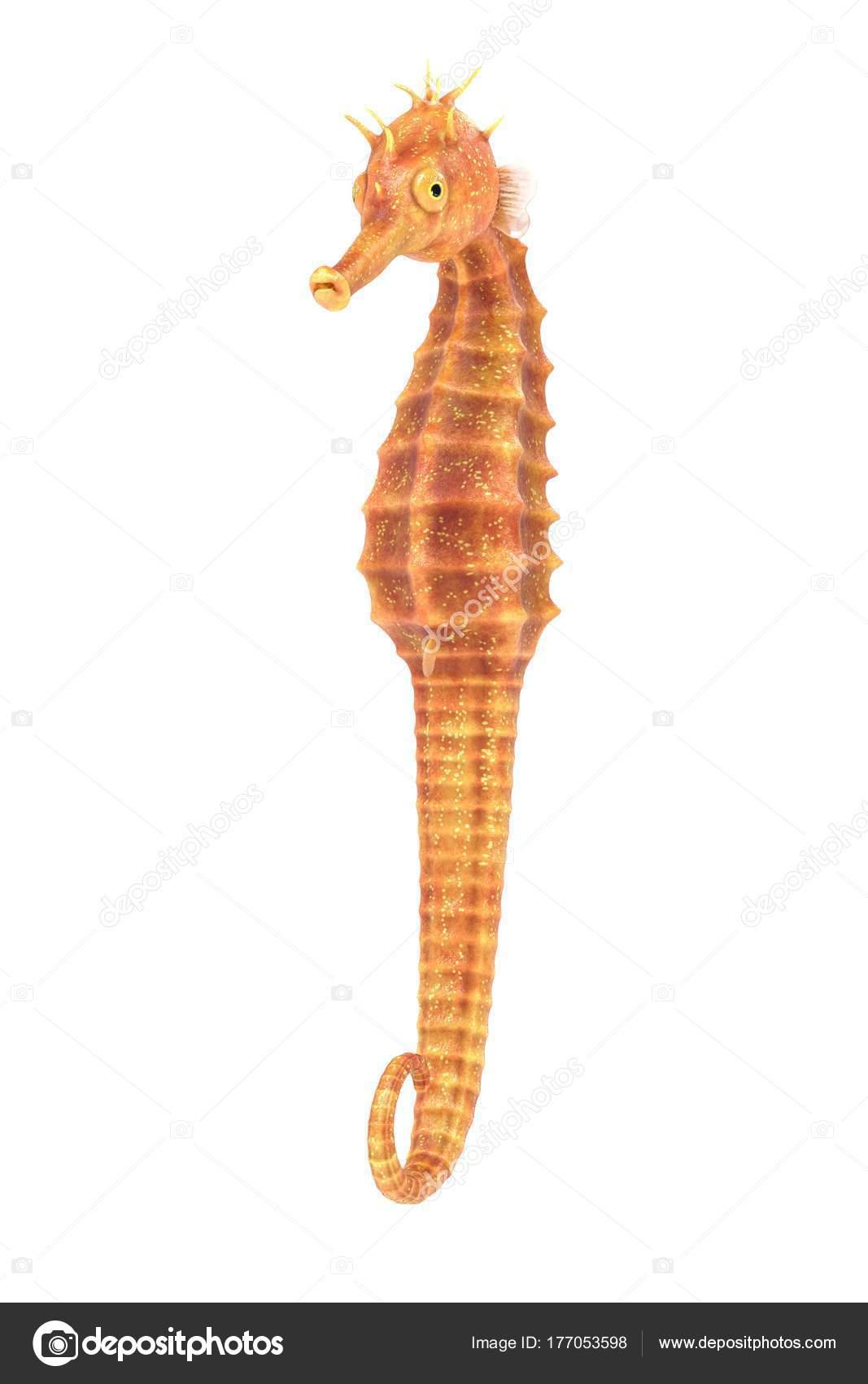 Rendu Réaliste Hippocampe Photographie 3drenderings 177053598