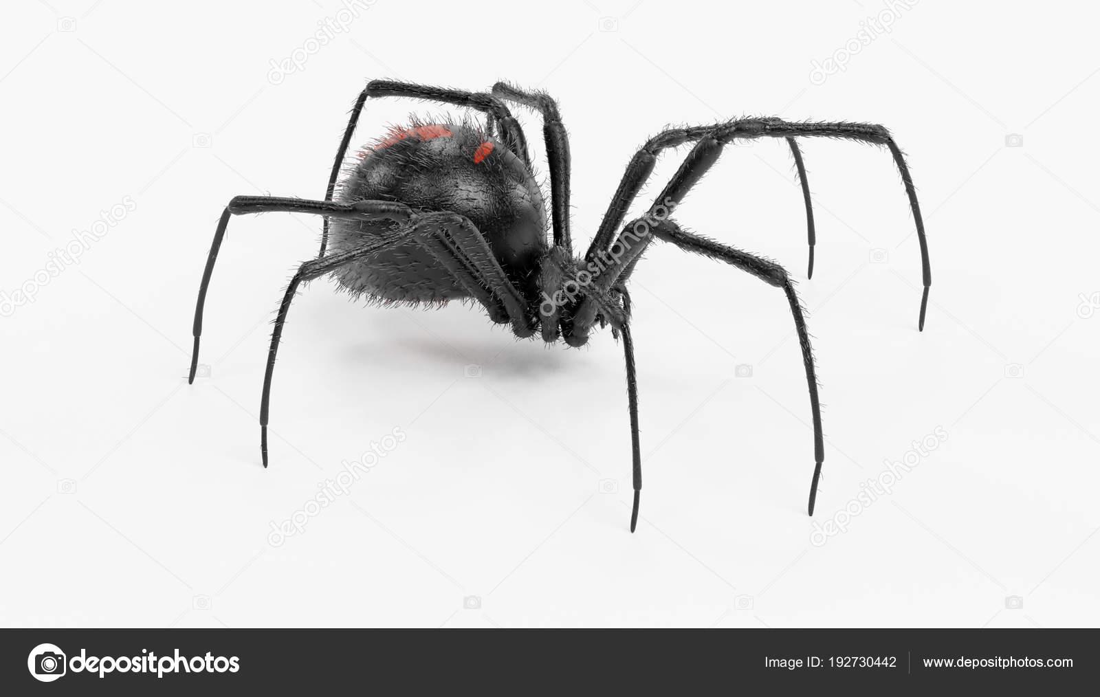 Rendu Réaliste Araignée Veuve Noire Photographie 3drenderings