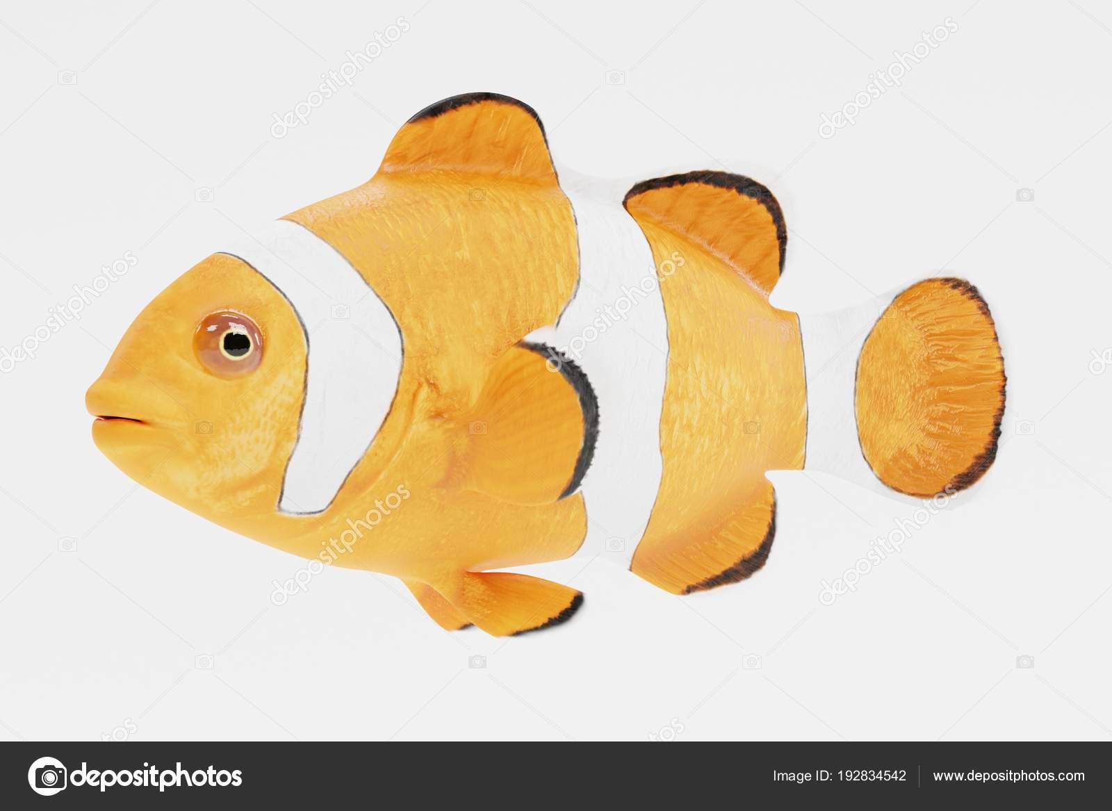 Realistic Render Clownfish Stock Photo C 3drenderings 192834542