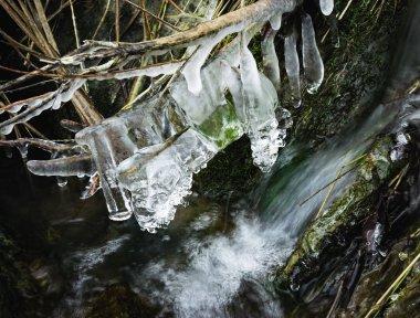 frozen dry grass in a stream