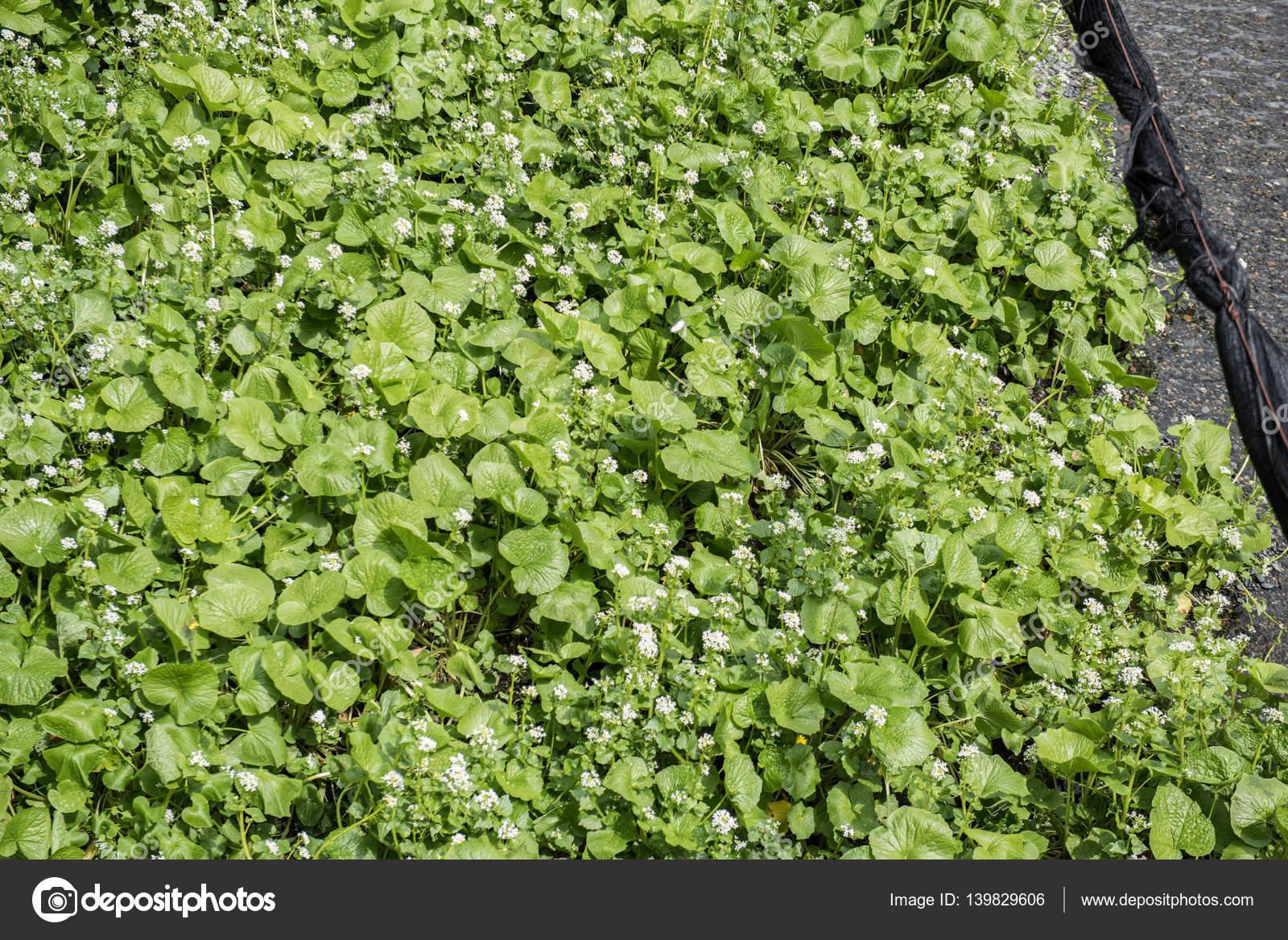 Terraza De Cultivo En Japón Fotos De Stock Eugenef