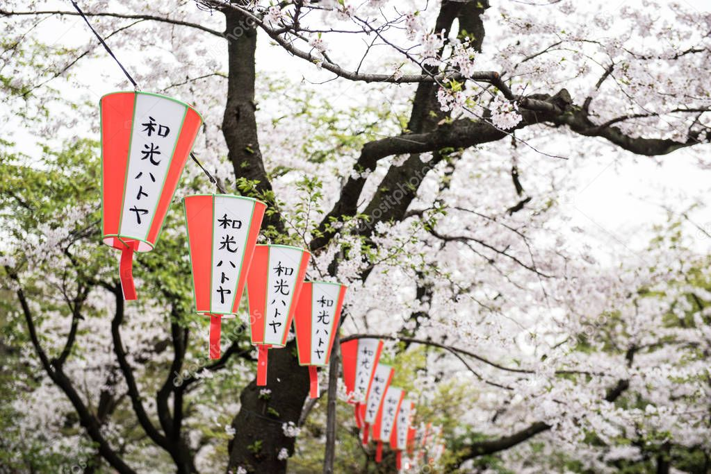 Lanterns with japanese words