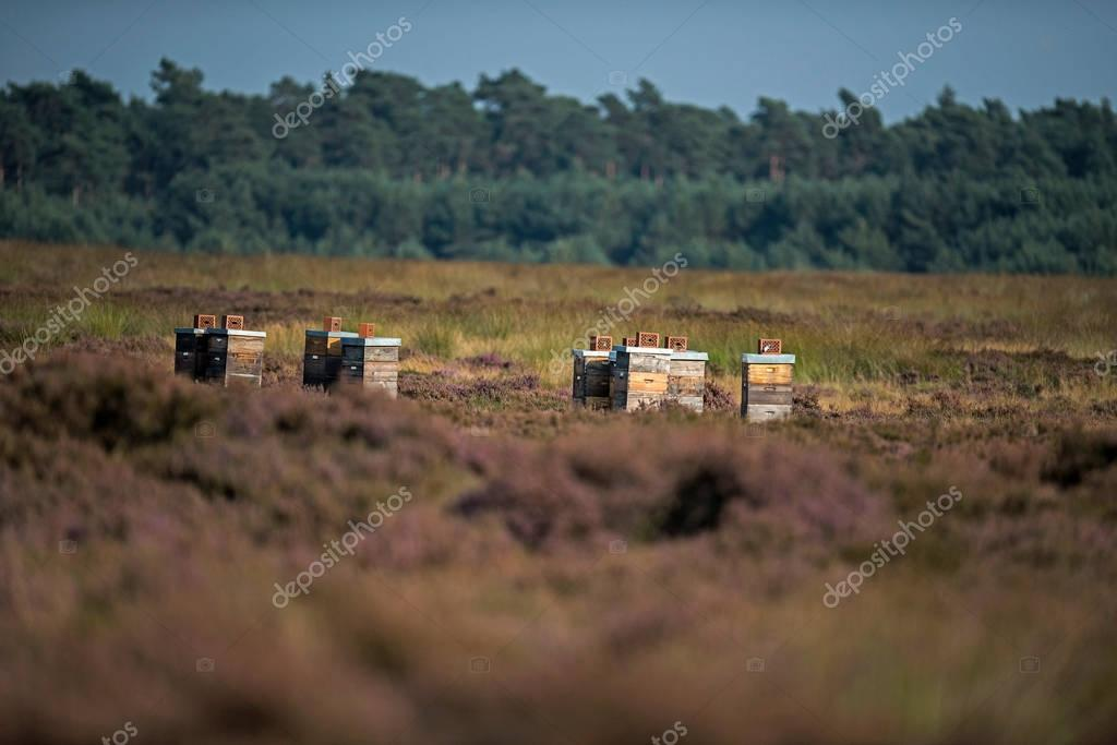 Bee boxes standing in moorland
