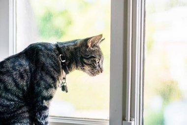 Tekir kedi kenarında oturan