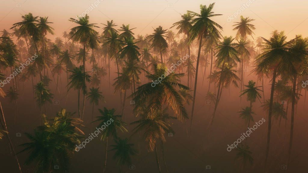 palm tree forest in morning mist
