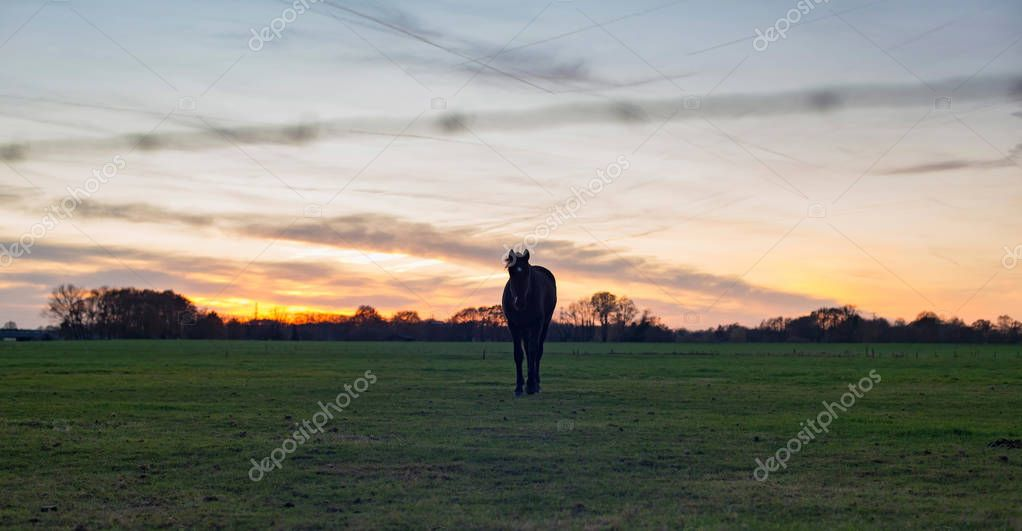 Silhouette of horse standing on meadow