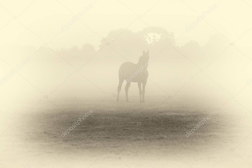 silhouette of horse in foggy field