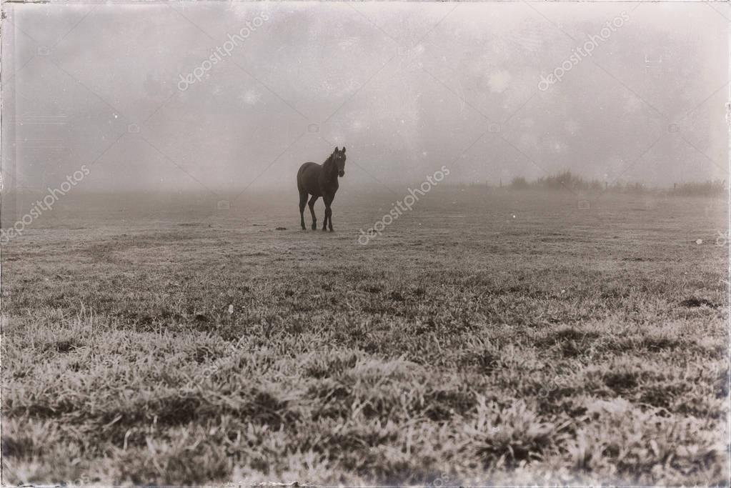 lonely black horse on misty meadow